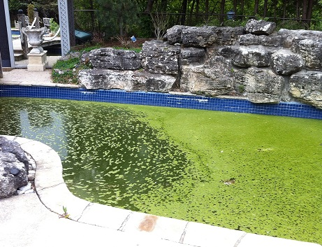 algae in pool water