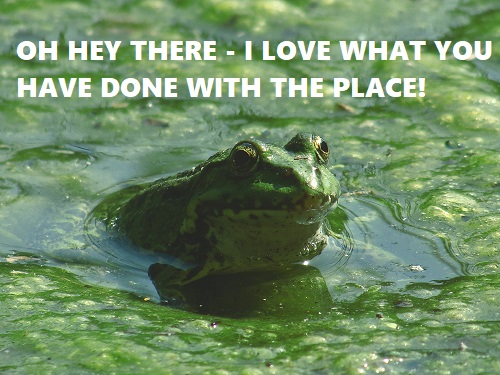 frog in a green swimming pool