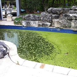 concrete pool painting