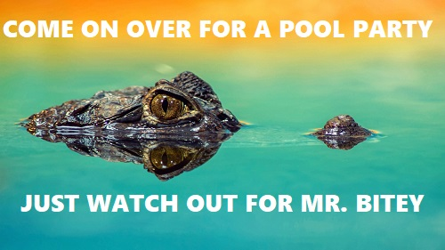 alligator in the pool