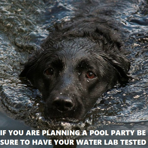 How to get your pool ready for a party