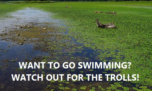 watch out for trolls in the pool bog